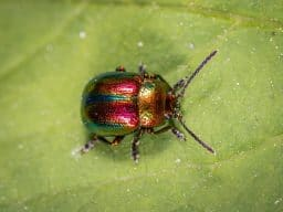 beetle-on-green-leaf-1126775