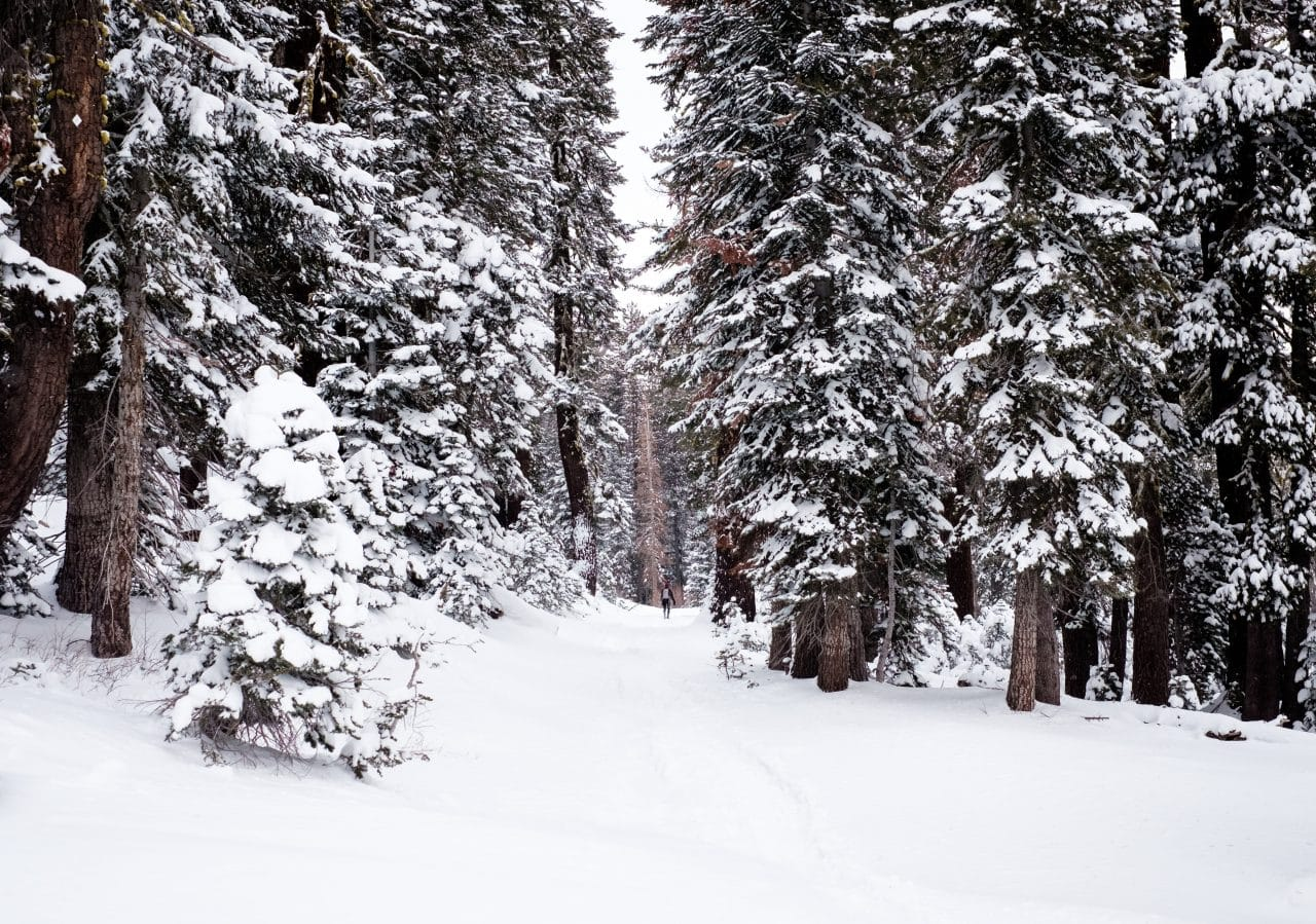 Snow covered trees in forest.